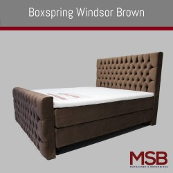 Windsor Brown