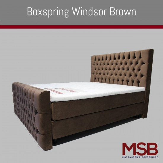 Windsor Brown